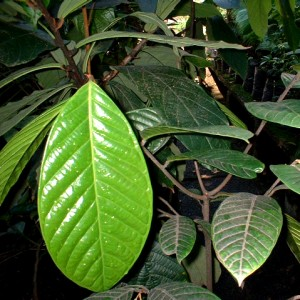 endemicas001